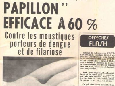 Moustique papillon Le Depeche de Tahiti