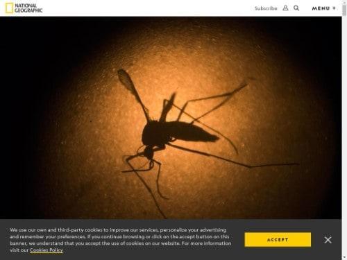 https://www.nationalgeographic.com/news/2016/02/160207-mosquitoes-zika-virus-environment-science-animals/
