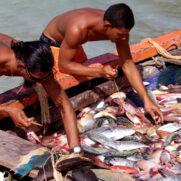 IMG-106 Récolte pêche Tikehau